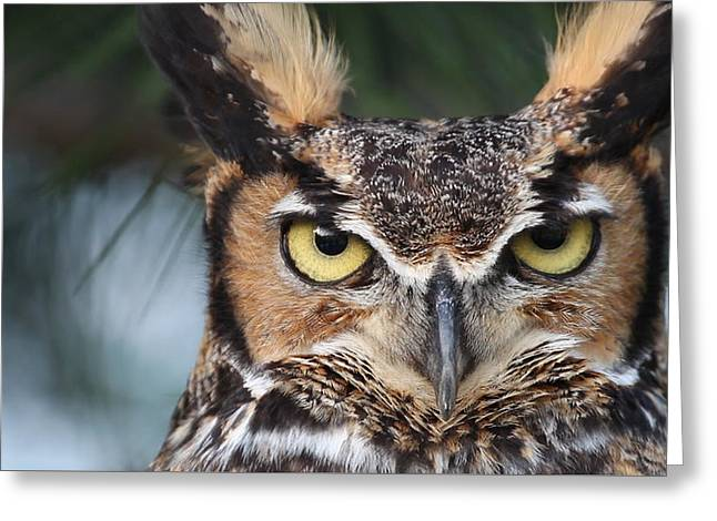 Great Horned Owl Eyes 51518 Greeting Card