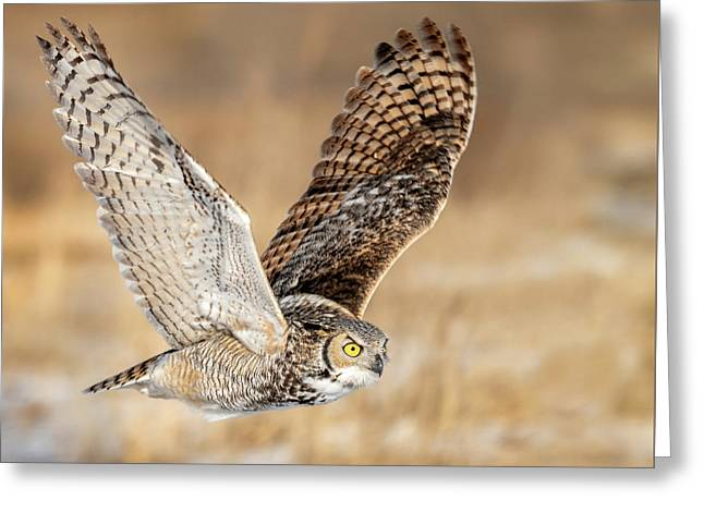 Great Horned Owl In Flight Greeting Card