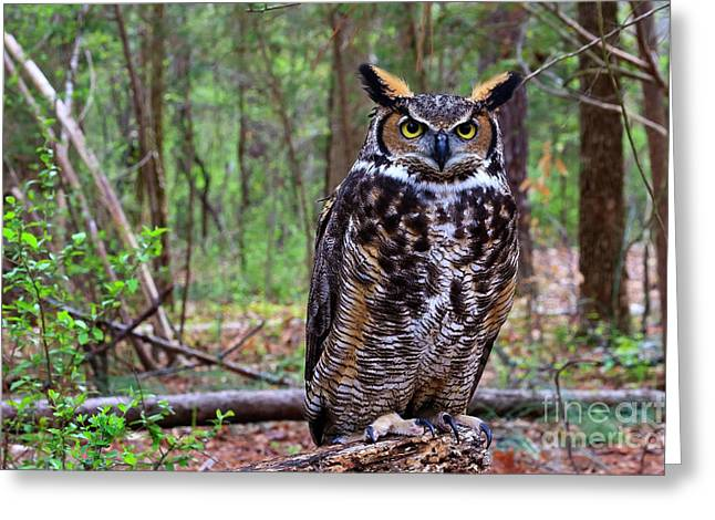Great Horned Owl Standing On A Tree Log Greeting Card
