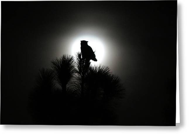 Great Horned Owl With Winter Moon Greeting Card by Robin Street-Morris