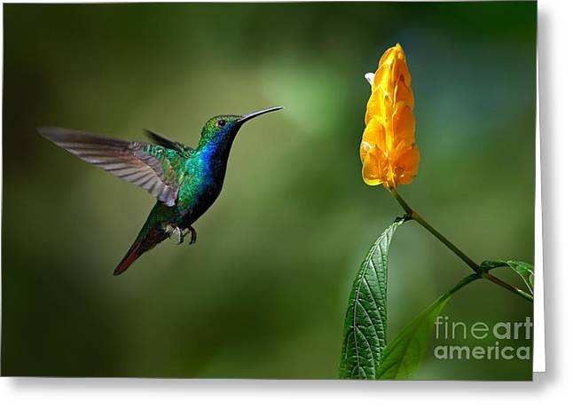 Green And Blue Hummingbird Greeting Card