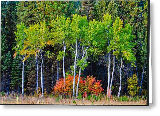 Green Aspens Red Bushes Greeting Card