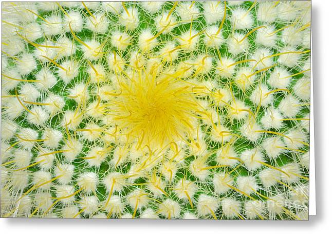 Green Cactus And Yellow Prickles Greeting Card