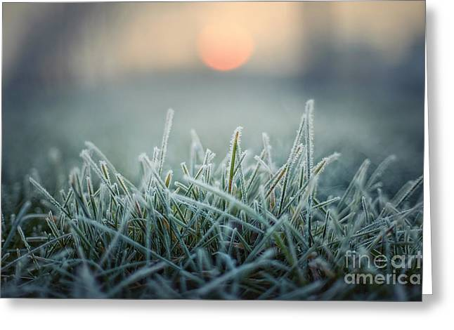 Green Grass With Morning Frost And Red Greeting Card by Chromakey