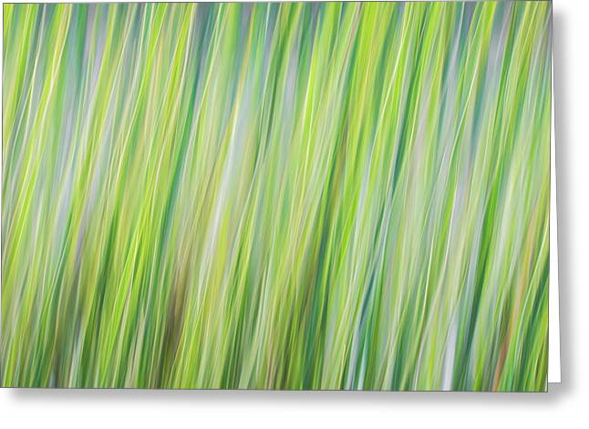 Green Grasses Greeting Card