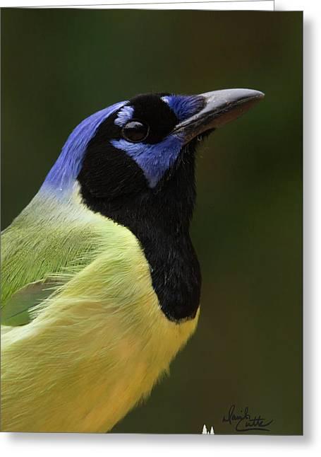 Green Jay Portrait Greeting Card