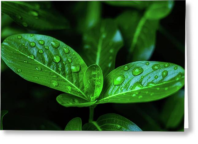 Green Leaf With Water Greeting Card
