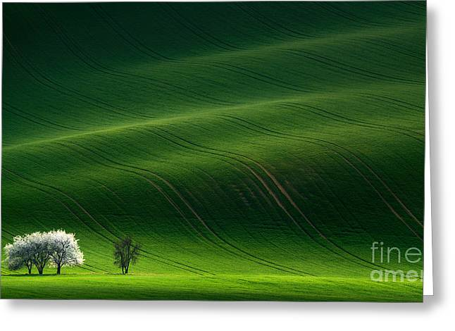 Green Rolling Spring Landscape With Greeting Card