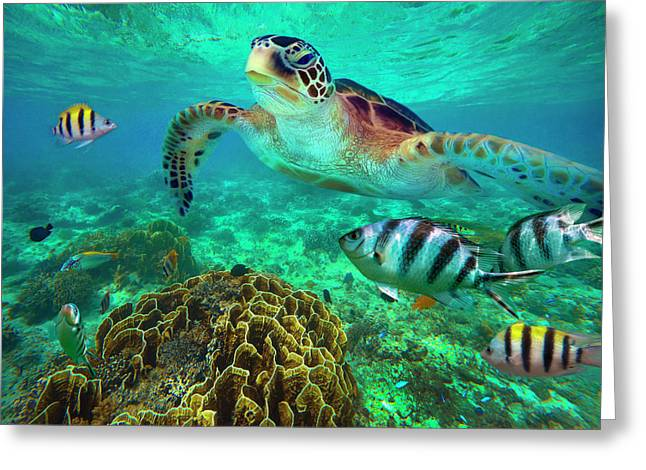Green Sea Turtle And Sergeant Major Greeting Card