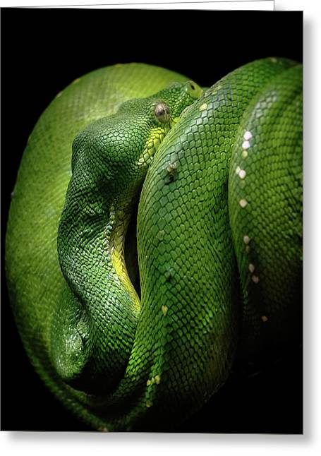 Green Tree Boa Greeting Card