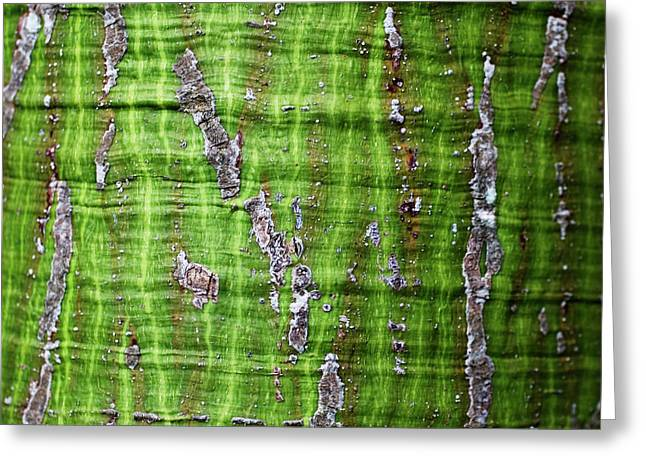 Greeting Card featuring the photograph Green Tree Trunk Surface - Organic Patterns And Textures by Charmian Vistaunet