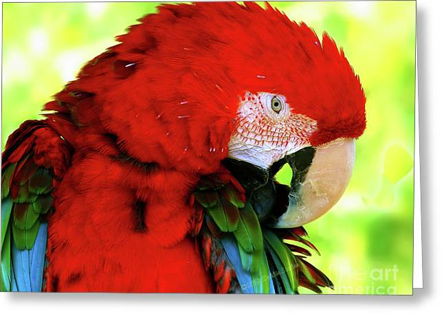 Green-winged Macaw Greeting Card