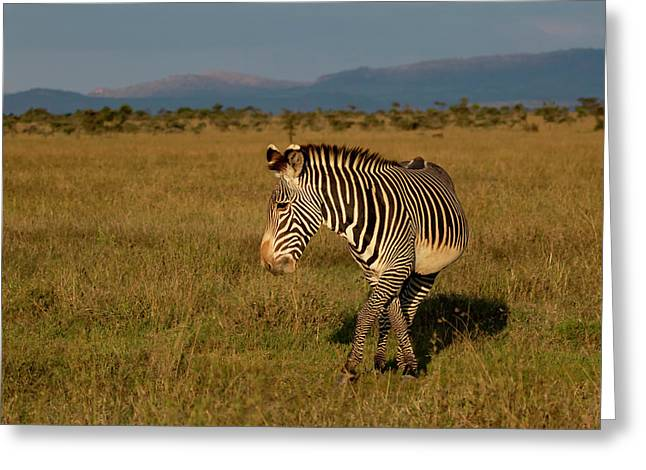 Grevy's Zebra Greeting Card