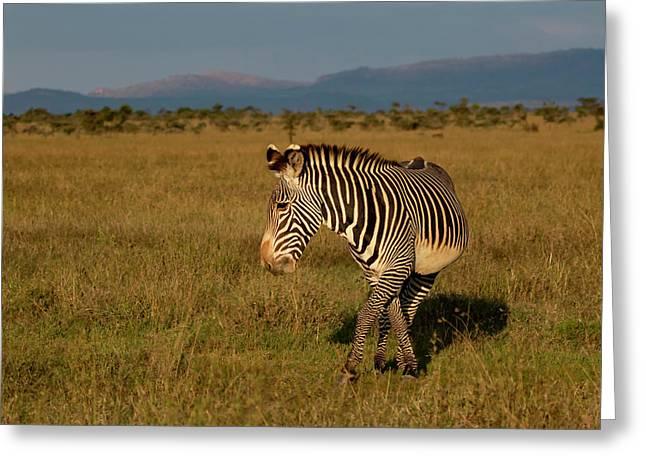 Grevy's Zebra Greeting Card