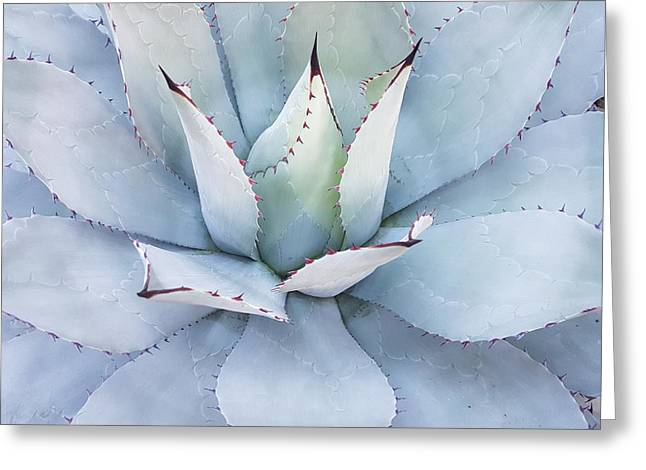 Greeting Card featuring the photograph Grey Cactus by Top Wallpapers