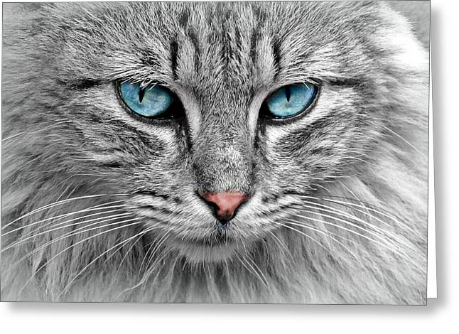 Grey Cat With Blue Eyes Greeting Card