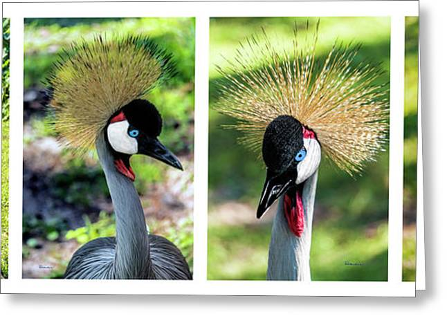 Grey Crowned Crane Gulf Shores Al Collage 1 Greeting Card