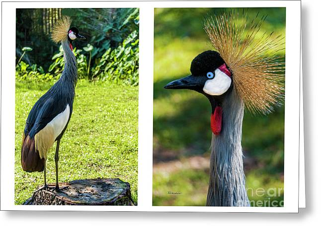 Grey Crowned Crane Gulf Shores Al Collage 10 Diptych Greeting Card