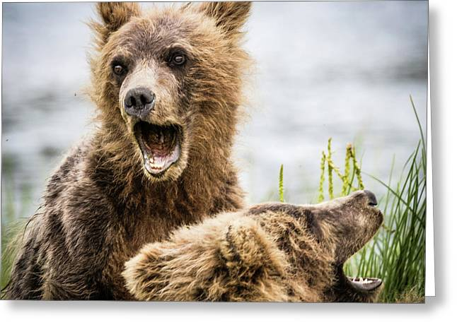 Grizzly Cubs Looking For Their Mum Greeting Card