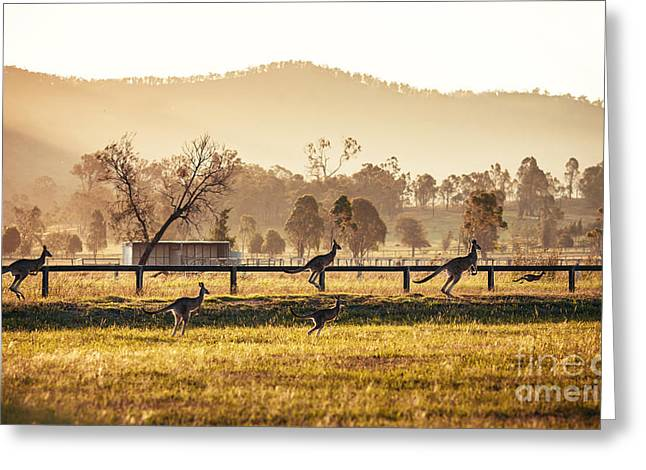 Group Of Australian Kangaroos At Hunter Greeting Card