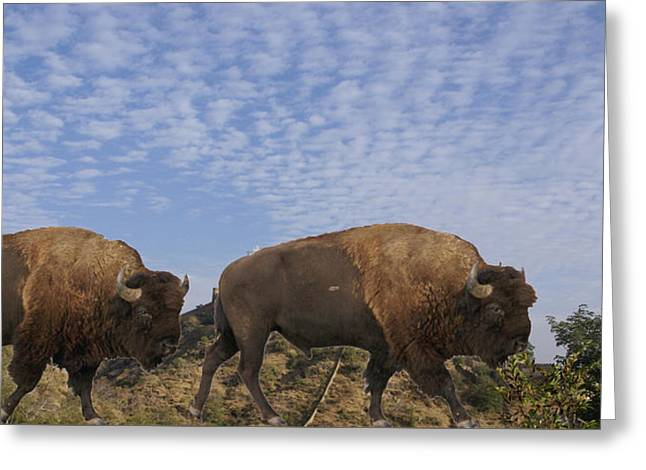Group Of Bison Walking Against Rocky Mountains  Greeting Card