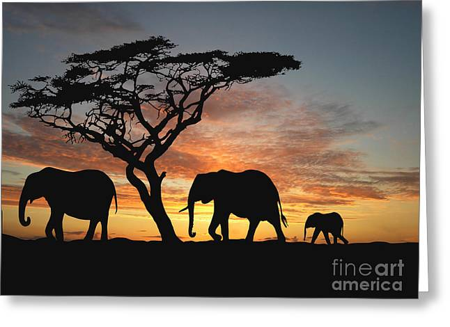 Group Of Elephant In Africa Greeting Card