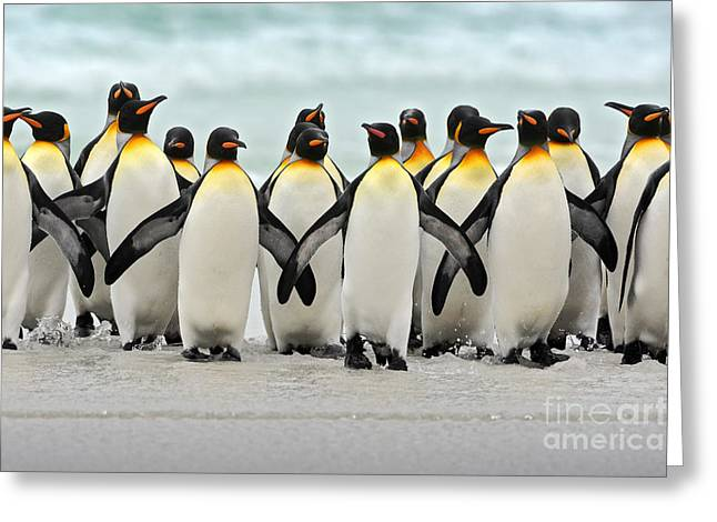 Group Of King Penguins Coming Back Greeting Card