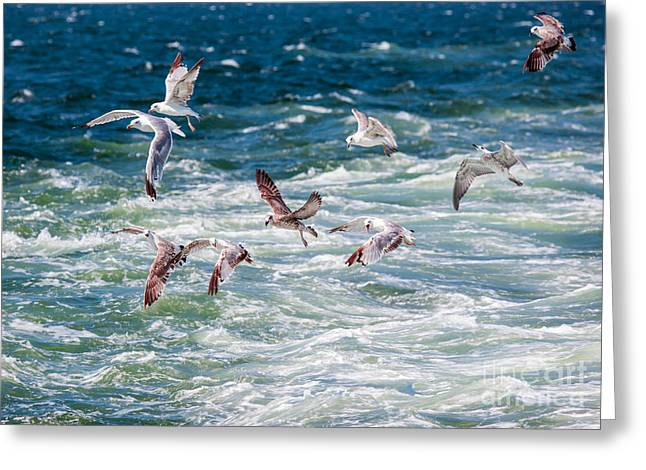 Group Of Seagulls Over Sea Greeting Card