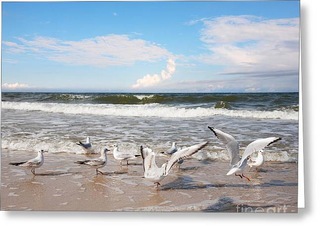 Group Of Seagulls Ower Sea Greeting Card