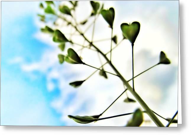 Growing Love Greeting Card