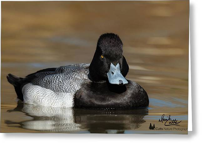 Grumpy Duck Greeting Card