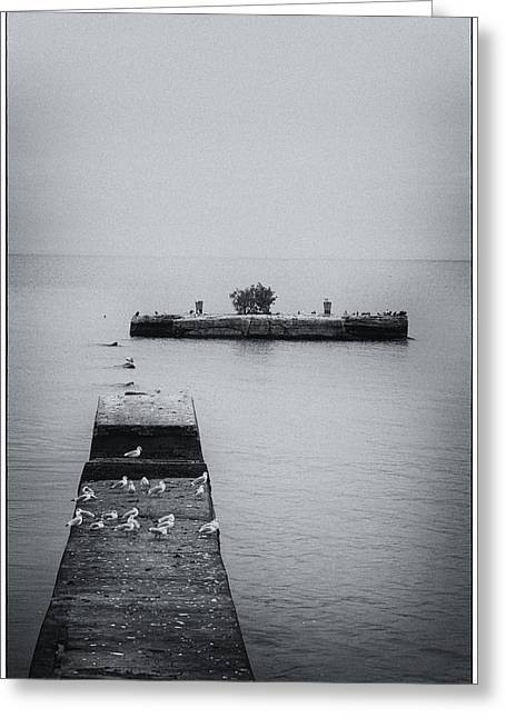Greeting Card featuring the photograph Gulls On The Pier by Guy Whiteley