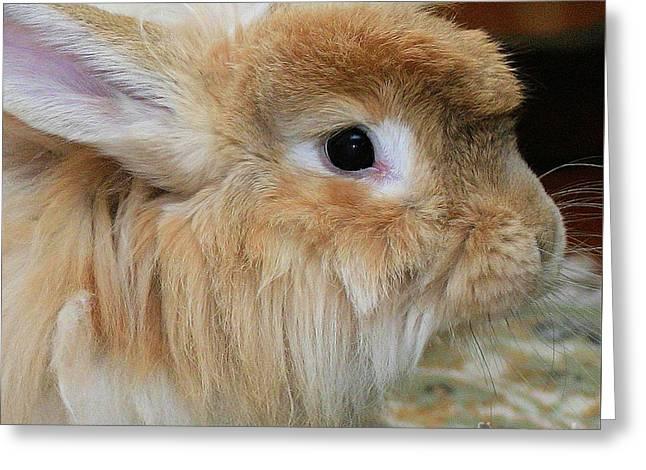 Hairy Rabbit Greeting Card