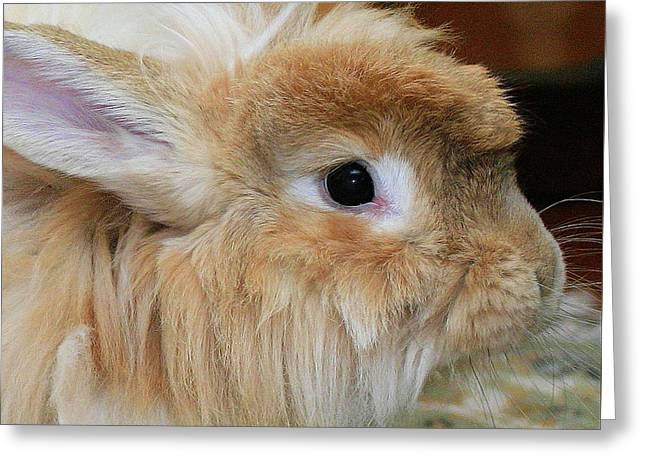 Hairy Rabbit Greeting Card