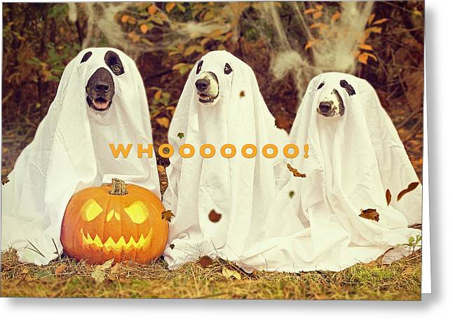 Halloween Hounds Greeting Card