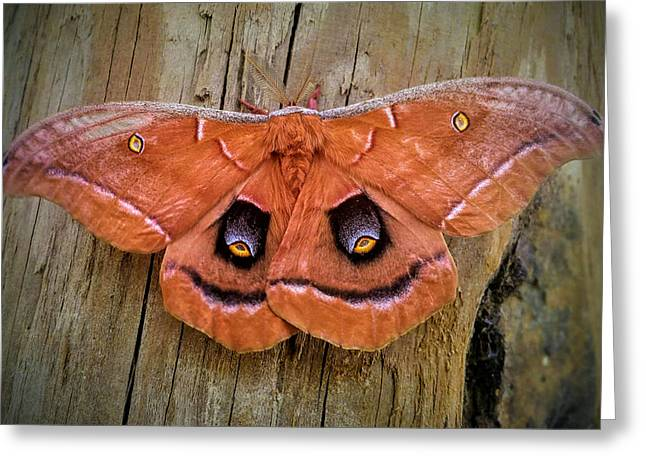 Halloween Moth Greeting Card