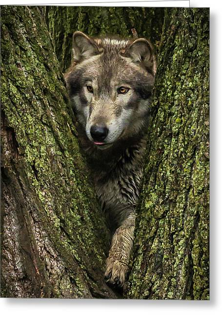 Hangin In The Tree Greeting Card