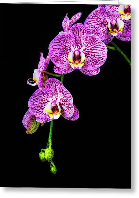 Hanging Orchids Greeting Card