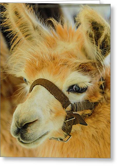 Happy Alpaca Greeting Card
