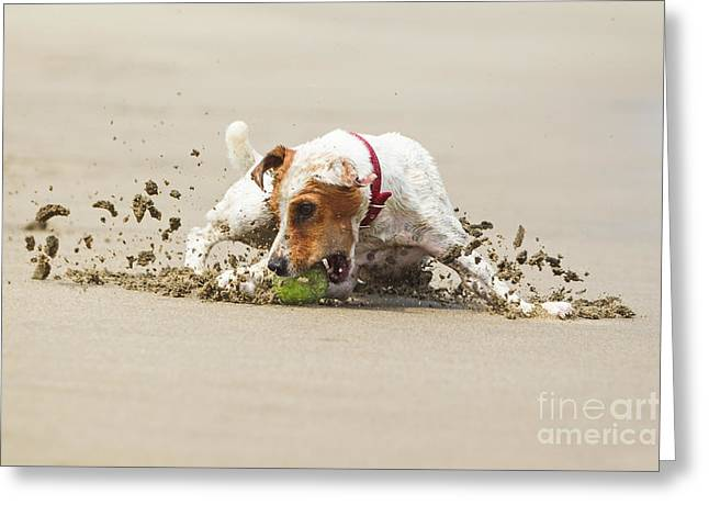 Happy Dog Stopping On The Ball High Greeting Card by Ammit Jack