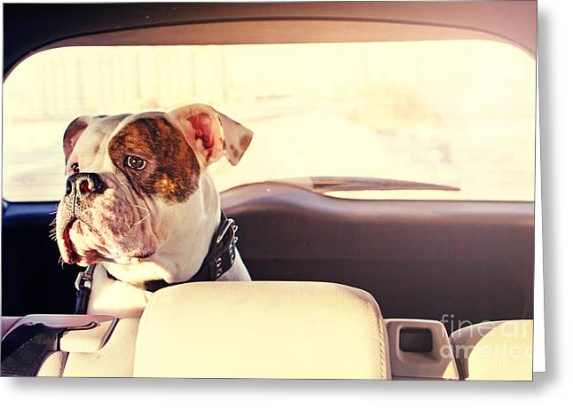 Happy Dog Traveling In The Car Boot Greeting Card by Little Moon
