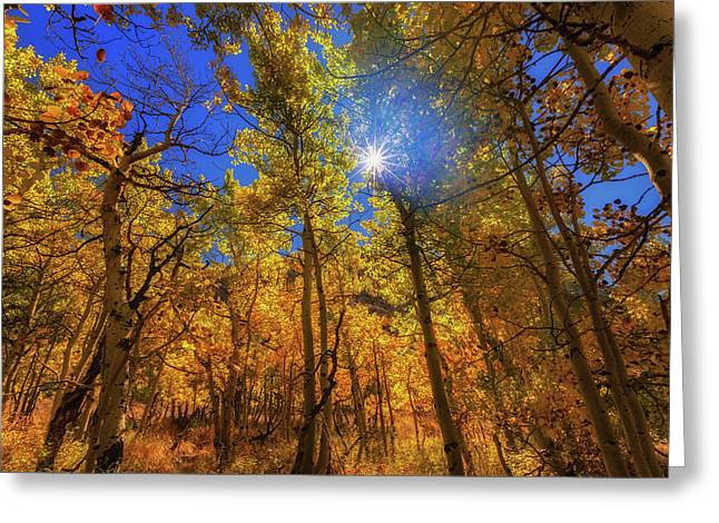 Greeting Card featuring the photograph Happy Fall by Tassanee Angiolillo