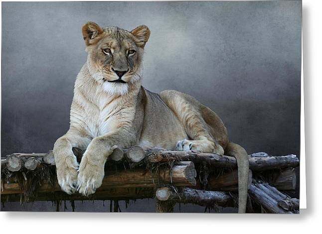Greeting Card featuring the photograph Happy Lioness by Debi Dalio