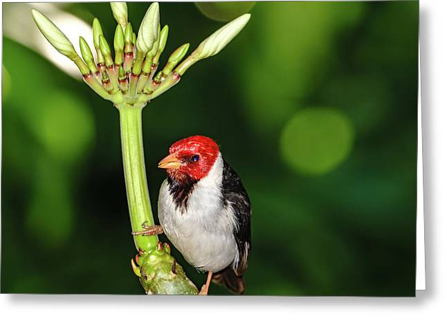 Happy Valentine's Day Bird Greeting Card
