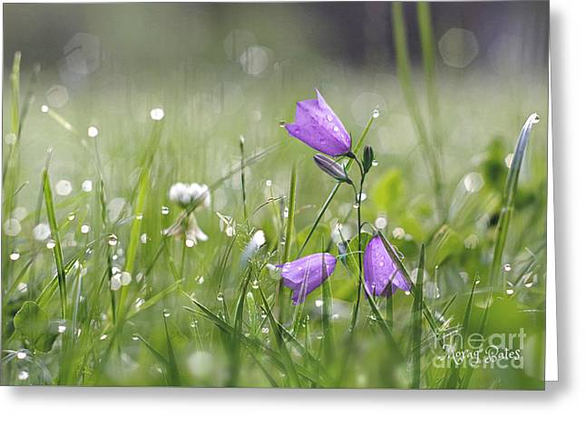 Harebells And Water Drops Greeting Card