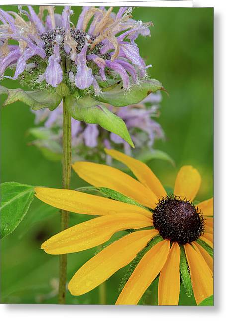 Greeting Card featuring the photograph Harmony In Nature by Dale Kincaid