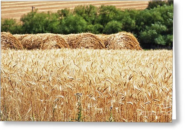 Greeting Card featuring the photograph Harvest Time In Idaho by Tatiana Travelways