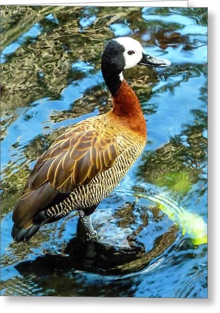 Hawaiian Duck Greeting Card