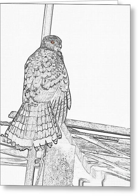 Greeting Card featuring the photograph Hawk Photo Sketch by Debbie Stahre