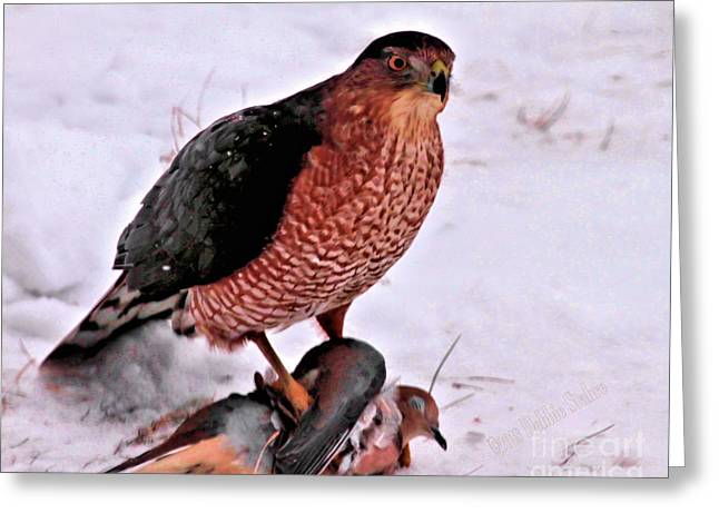 Greeting Card featuring the photograph Hawk Takes Dove by Debbie Stahre